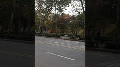 U yo vive in Korea (video in Occidental / Interlingue)