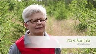 UPM kokeneen metsänomistaja Päivi Karhalan kumppanina  - UPM Metsä