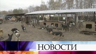 ВВоронеже разгорается конфликт между владельцем единственного вгороде приюта для собак исоседями.
