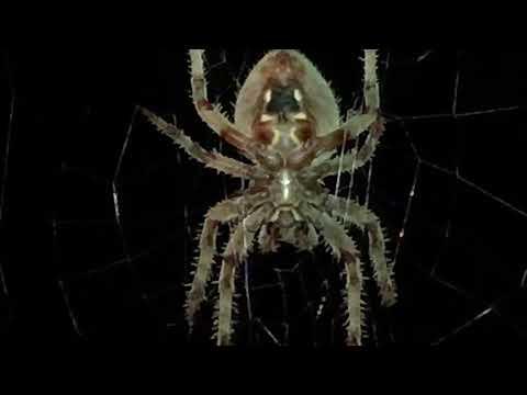 Spider! 🕷