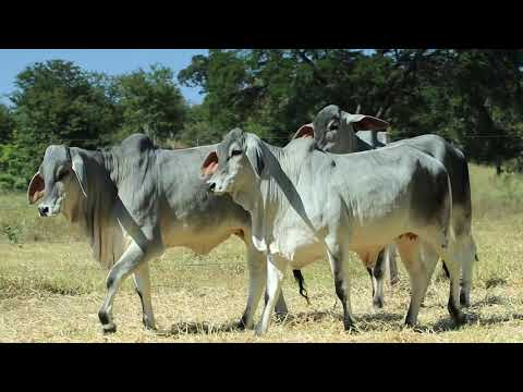 LOTE 20   XALE 307,260,266