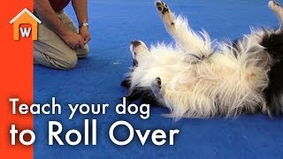 Teach Your Dog to Roll Over