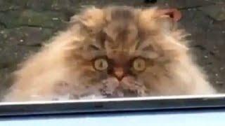 ПРИКОЛЫ С ЖИВОТНЫМИ Смешные Животные Собаки Смешные Коты Приколы с котами Забавные Животные 121