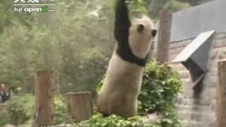 熊猫秘笈 一 熊猫剩女 绿色空间 20090316 1 4