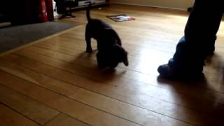 Training a Hyper Cocker Spaniel Puppy!!