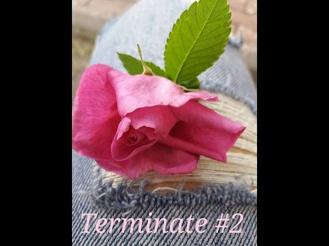 Terminate #2