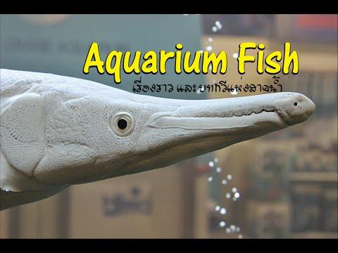 Aquarium fish งานวันปลาสวยงามแห่งชาติ ครั้งที่12