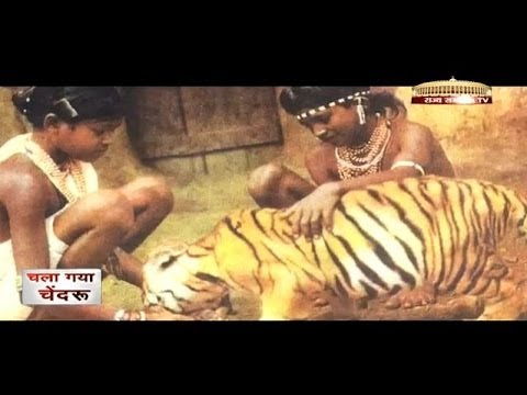 Special Report - Chendru Mandavi the 'Tiger Boy'