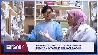 Perangi Denggi & Chikungunya Dengan Nyamuk Berwolbachia | Mhi (9 Julai 2019)