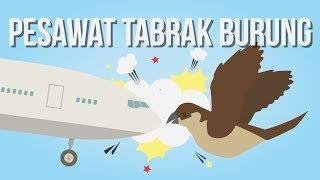 Apakah Pesawat Sering Menabrak Burung Di Langit?