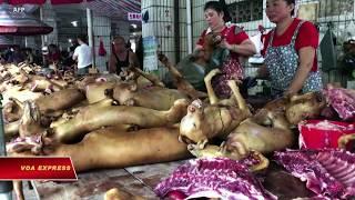 Chuyện thịt chó, mèo ở Việt Nam lên Quốc hội Mỹ (VOA)