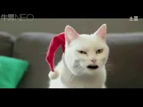 Cat Singing Christmas Song [Walmart Ad]