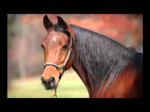 Horses Favorite Disease