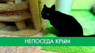 Кот Крым без задней лапы бегает и играет | Фонд Умка
