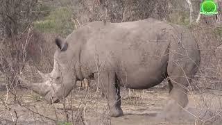 15 ANIMALES MAMADISIMOS los Mas Peligrosos Del MUNDO (AFRICA) (Most Deadly Animals)