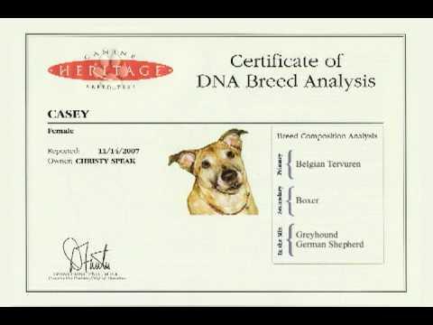 Free Dog Dna Breed Test