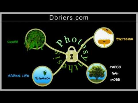 Photosynthesis: duction and How It Evolved?