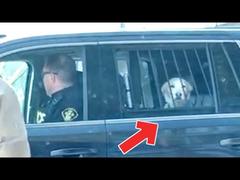 Doggo Arrested For Being A Bad Boy; Sitting Too Much Makes You Dumb Dumb - 04/20/2018