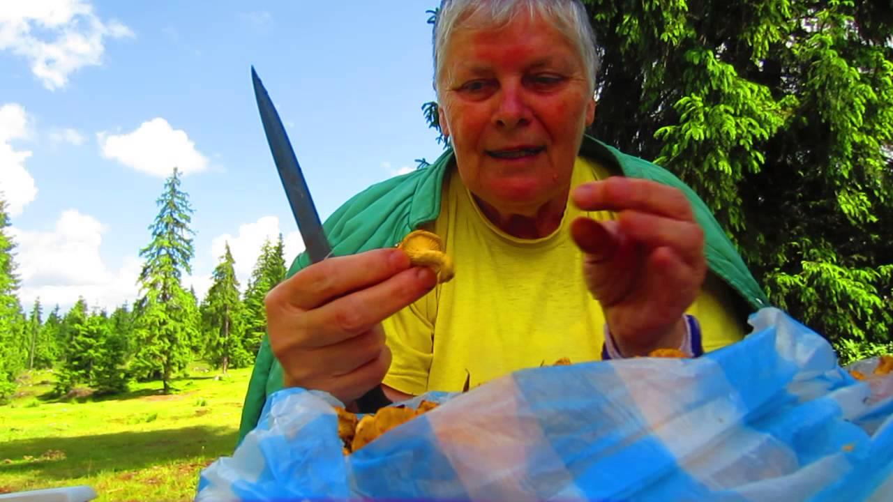 kezelés parazitákból származó rókagombával történő kezelés)