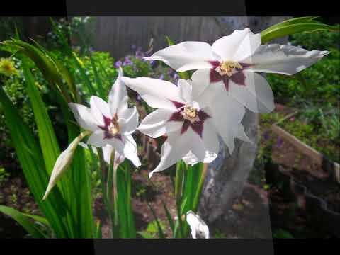 Дача в Нефтекамске. Огород под цветы. Цветочный сад.