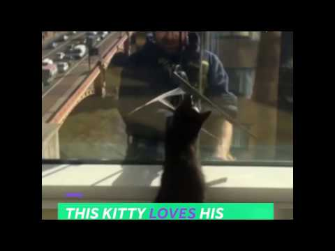 Kitty loves his condo's window cleaners