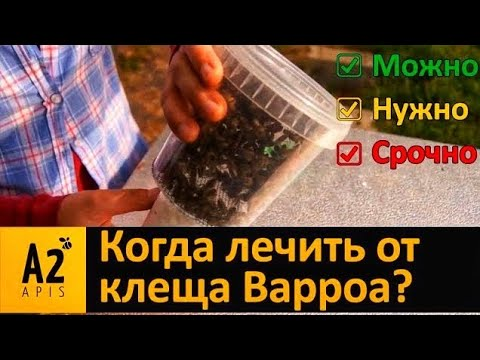 Видео инструкция теста пчел на клеща варроа