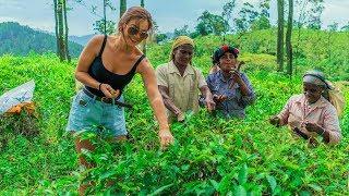 La cules ceai in Sri Lanka