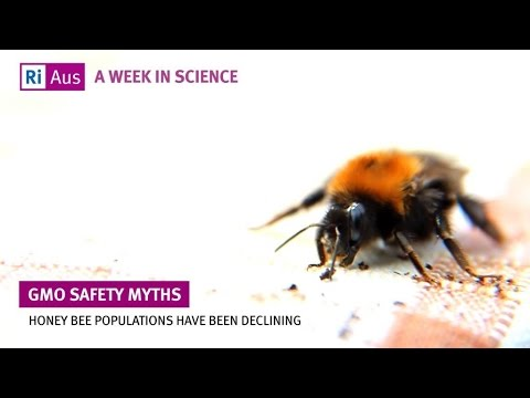 Are GMOs safe? - A Week in Science