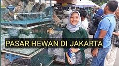 BERBAGAI MACAM BINATANG DI JUAL DISINI   PASAR HEWAN DI JAKARTA