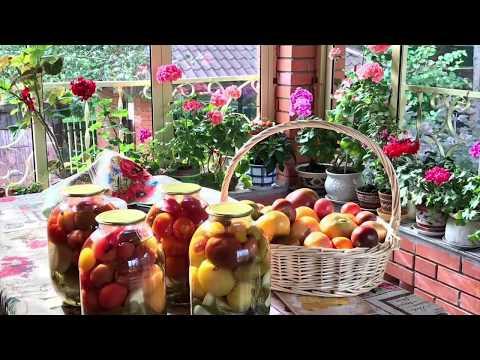 Заказ семян томатов / лучшие сорта 2019