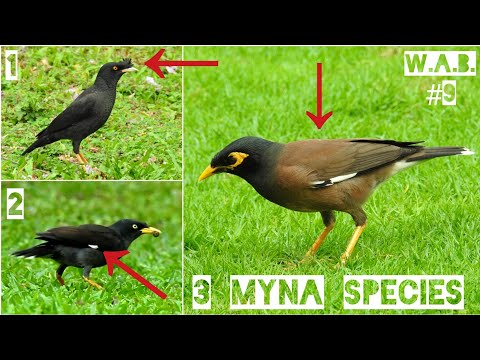 Malaysian MYNAS Difference + SNEAK PREVIEW | Peninsular, Malaysia | Wild Animal Behaviour #9