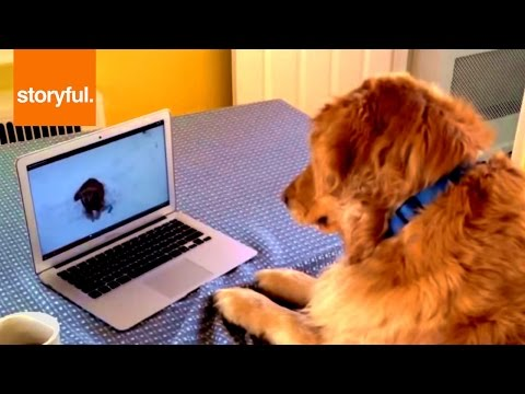 Dog Wants To Play With Computer Puppy