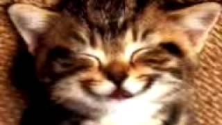 قطه بتتكلم