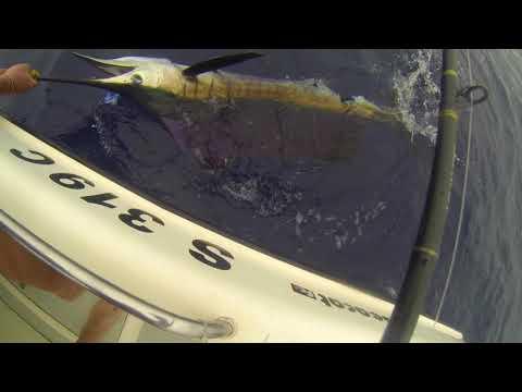 Deep Sea Fishing Off Durban! Sailfish, Dorado And Tuna Action!!