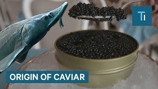 Why Caviar Is So Expensive So Expensive