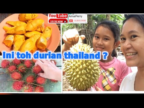 (SUBTITLE)KUNINGNYA DUREN THAILAND, LAHIR 9 ANAK ANJING AMAIPERRY 🥰