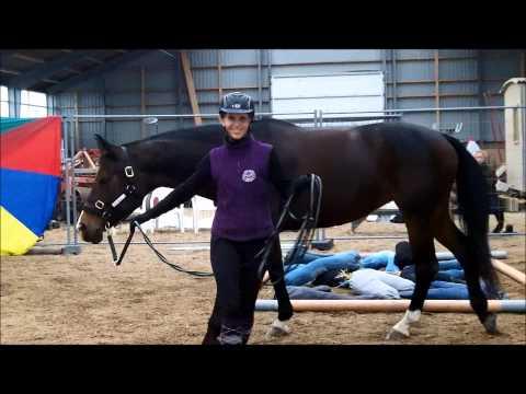 Holistic Horsemanship Experience, Denmark, May 2014