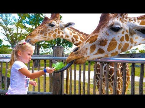 Влог в зоопарке Майами Настя кормит жирафов