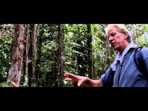 Future Biodiversity-Based Business (Peatland Rehabilitation Project)