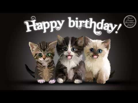 Happy Birthday Cats Youtube