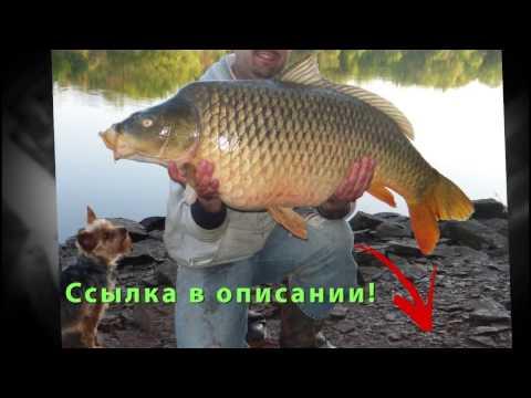 Отзывы начинающего рыбака. FishHungry