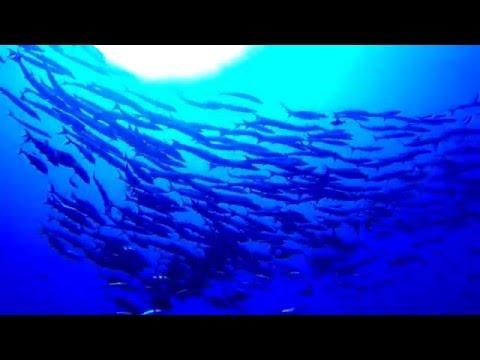 Papua New Guinea - Kimbe Bay