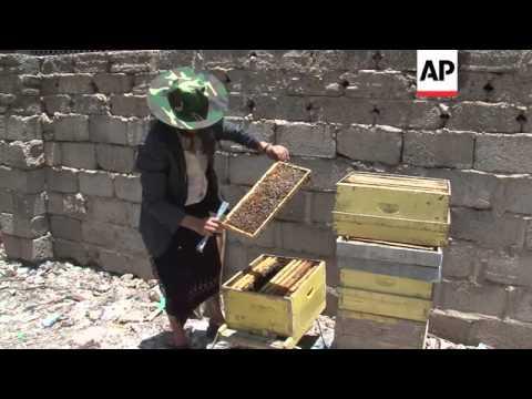 Yemeni honey production plummets amid security and economic woes