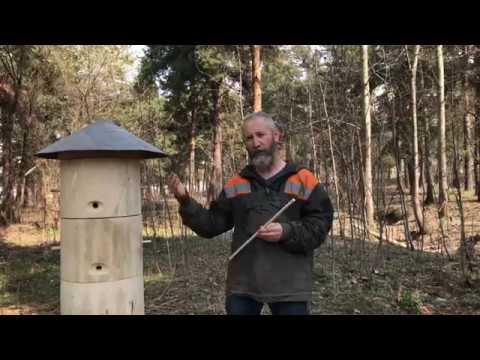 Колоды для пчёл. Рой прилетел