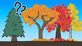 Почему листья меняют цвет на самом деле?