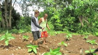 "#BecomingFilipino ""Region 10 List"" Ep. #23 - Ploughing a Field With a Cow"