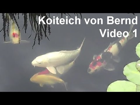 koiteich von bernd video 1 koi karpfen im gartenteich youtube. Black Bedroom Furniture Sets. Home Design Ideas