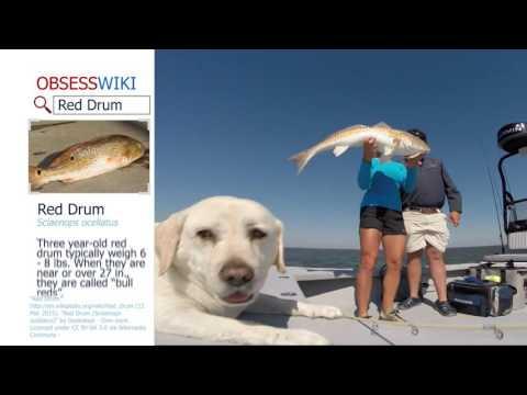 Season 2 Episode 7 | Louisiana Redfish With Moe Newman | 207