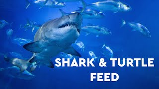 Shark & Turtle Feed  - Facebook Live (March 2020)