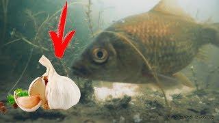 РЕАКЦИЯ КАРАСЯ НА ЧЕСНОК В МАЕ / Подводное видео / Sergei Sorokin / рыбалка 2018
